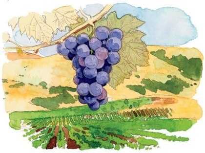 cn_image-1.size.napa-grapes-bunch-wine